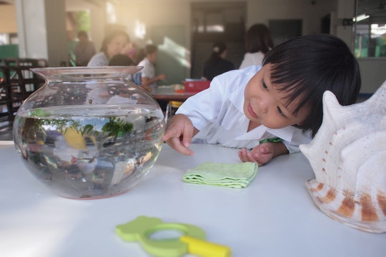 a toddler looking at a fish in a bowl