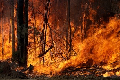 An intentionally lit controlled fire burns intensely near Tomerong, Australia, in an effort to conta...