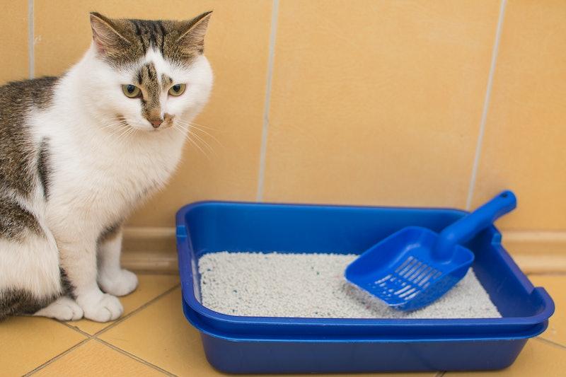 best cat litter scoops