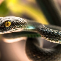 How snake heat vision is being used to transform robotics