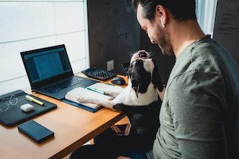 dog sitting on man's lap while working