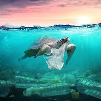 Ocean pollution: These are the deadliest plastic items to sea animals