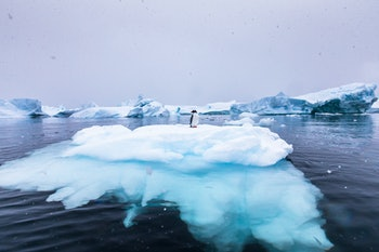 Gentoo Penguin alone on iceberg in Antarctica, scenic frozen landscape with blue ice and snowfall, Antarctic Peninsula