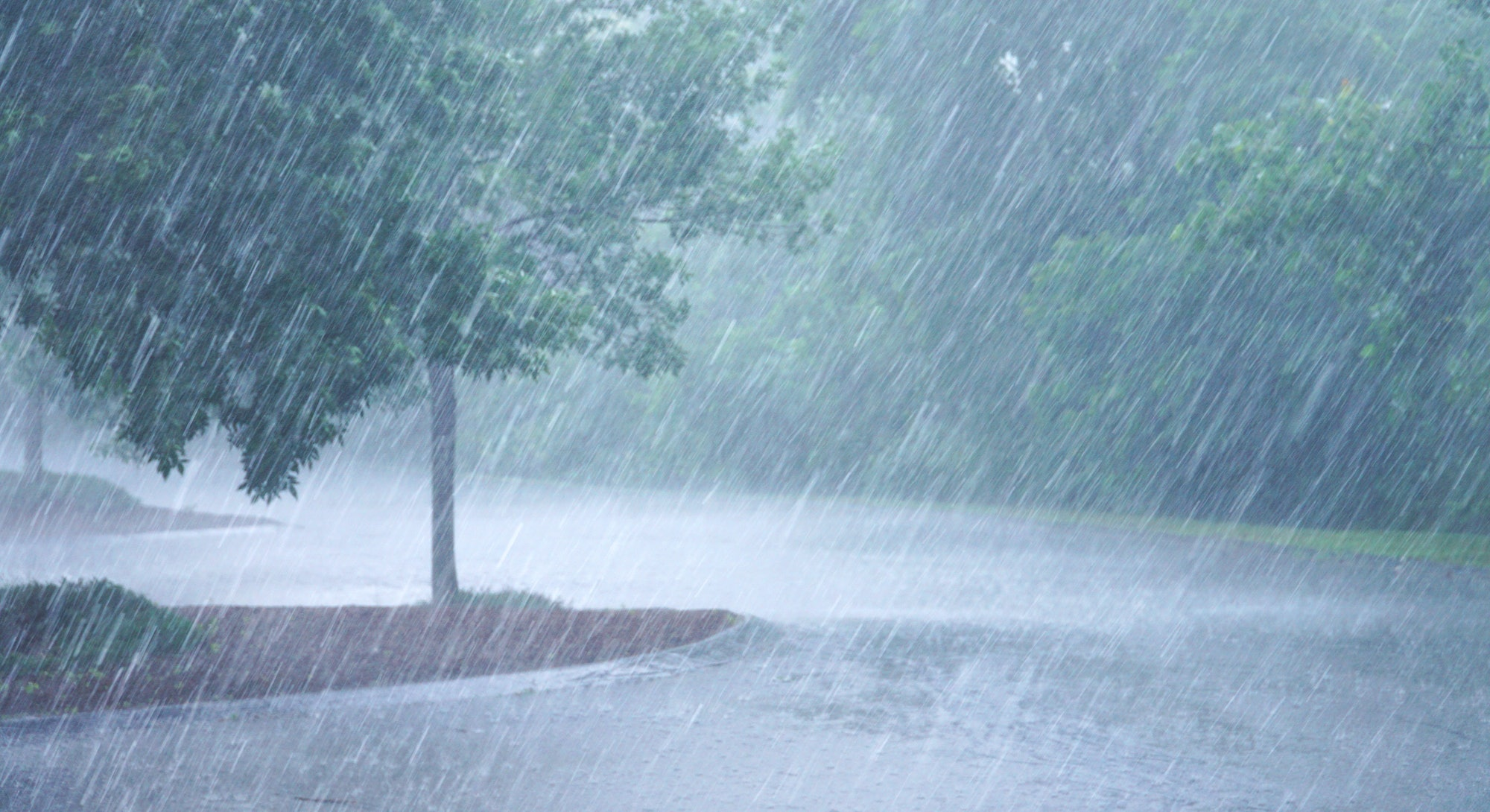 heavy rain and tree in the parking lots