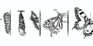 Metamorphosis of the Swallowtail - Papilio machaon - butterfly. 6 studies of changes. Hand drawn vector illustration