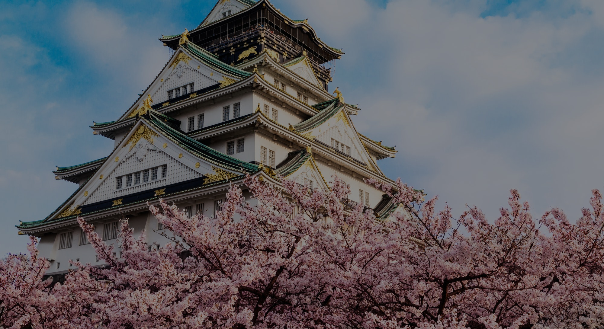 Osaka castle with cherry blossom. Japan, April. Spring icon view.