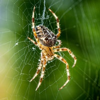 Scientists reveal how spiders make their silk