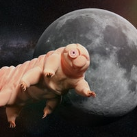 Why tardigrades spilled all over the Moon in 2020