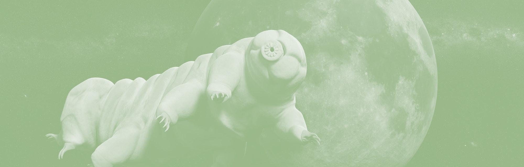 tardigrade, water bear visiting the Moon (3d illustration)