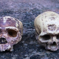 Archaic DNA stemming from ancient sex fundamentally influences health today