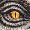 Closeup yellow eye of the dinosaurs with terrifying. Dinosaur hunters are staring with horrible yellow eye. Dinosaur eye.