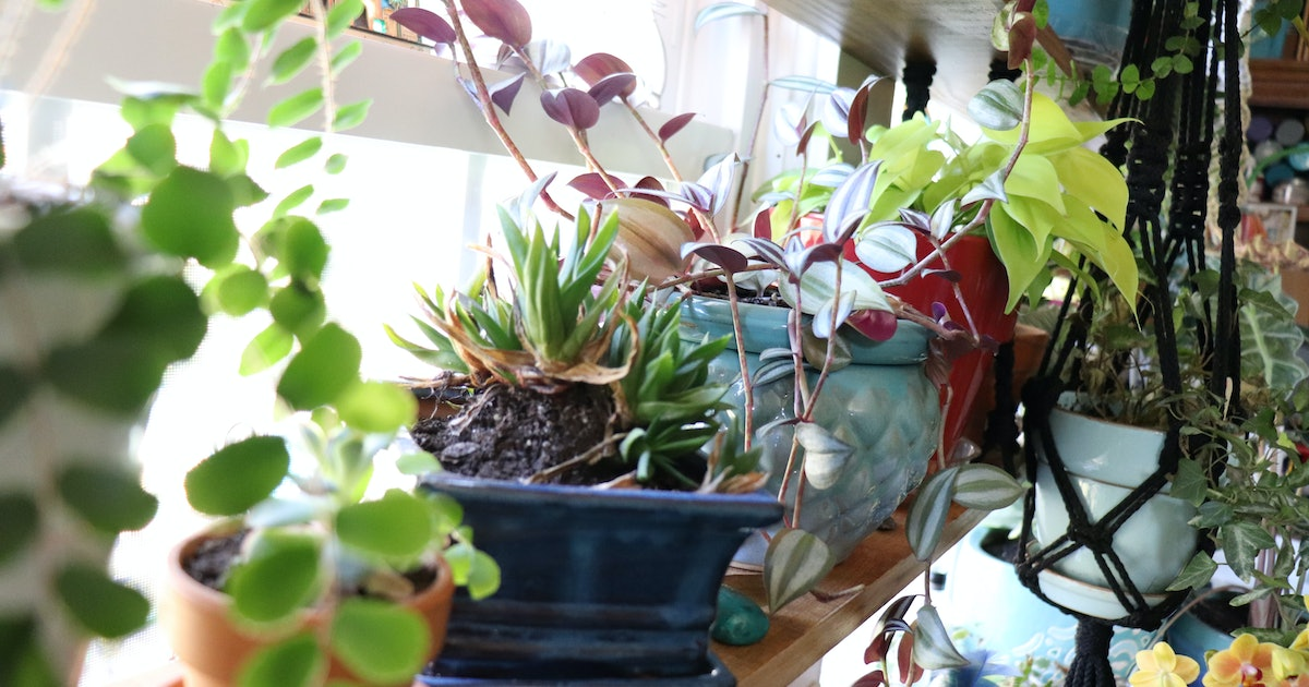 Best houseplants for beginners — 7 resilient plants that survive neglect