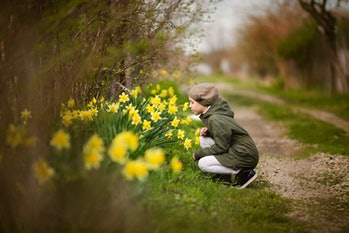 Cute happy little girl in the spring country smelling yellow daffodils.