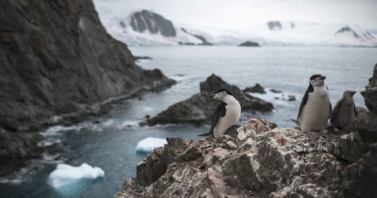 Not cool: Antartica is now warm enough to be a vacation destination