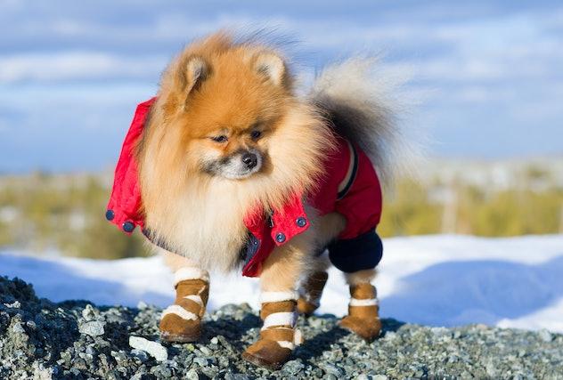pet on a walk