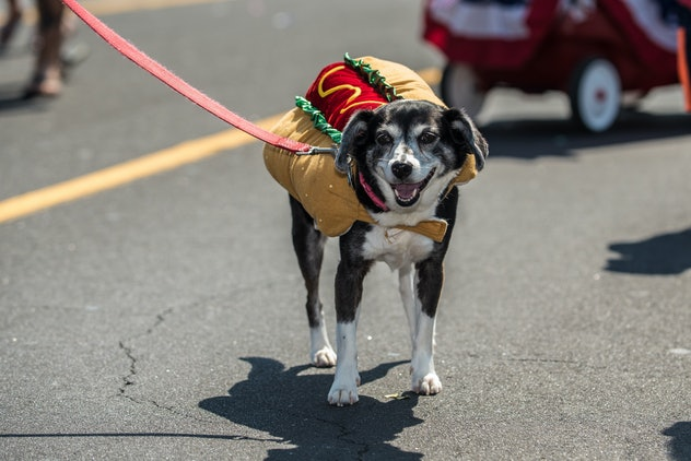 Mixed breed dog wearing costume of hot dog for celebration parade on city street.