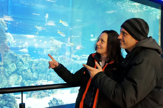 Married couple emotionally examines fish in an aquarium at the zoo