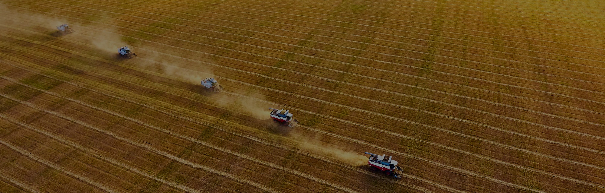 Harvesting of wheat. Combine harvesters agricultural machines collecting golden  wheat on the field. View from above. Agriculture.