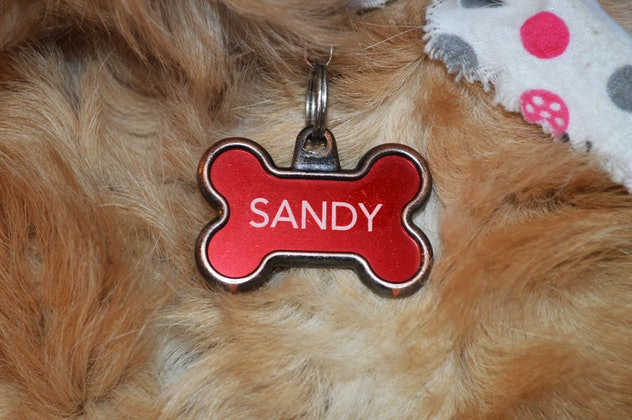 dog name collar