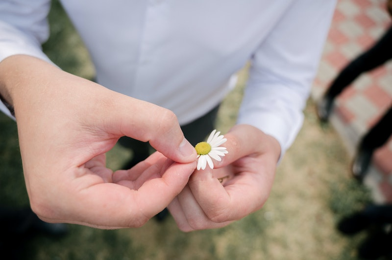 loves me loves me not guessing game by tearing off a daisy petal. a daisy held in Caucasian mans hands close up
