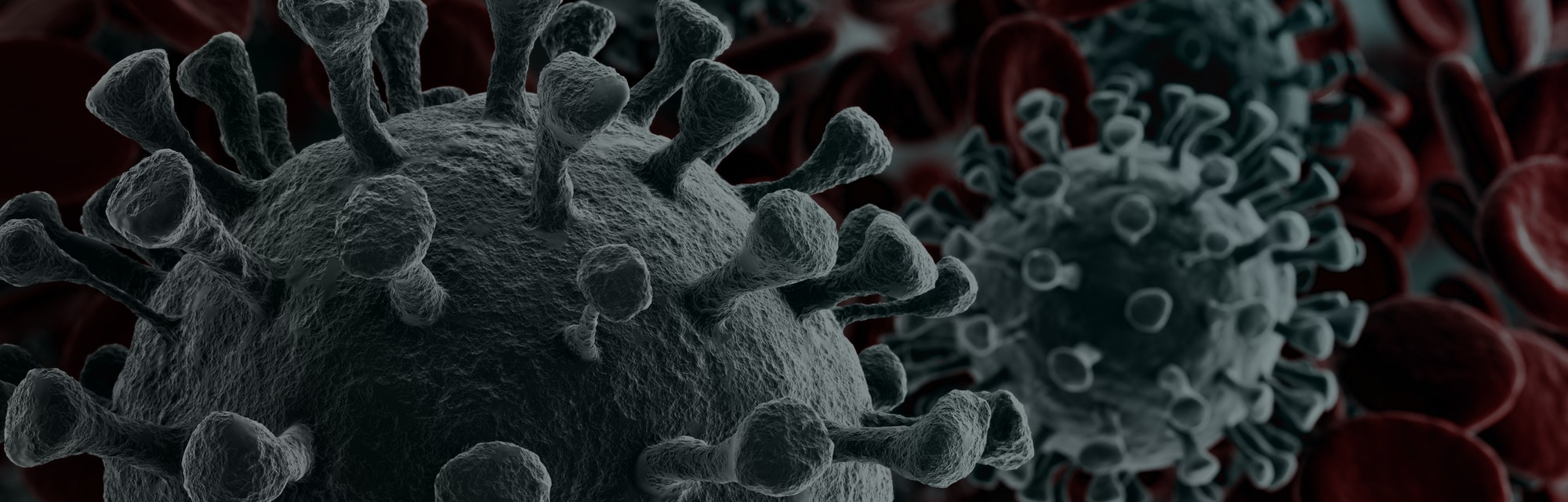 Coronavirus 2019-nCov novel coronavirus concept resposible for asian flu outbreak and coronaviruses influenza as dangerous flu strain cases as a pandemic. Microscope virus close up. 3d rendering.