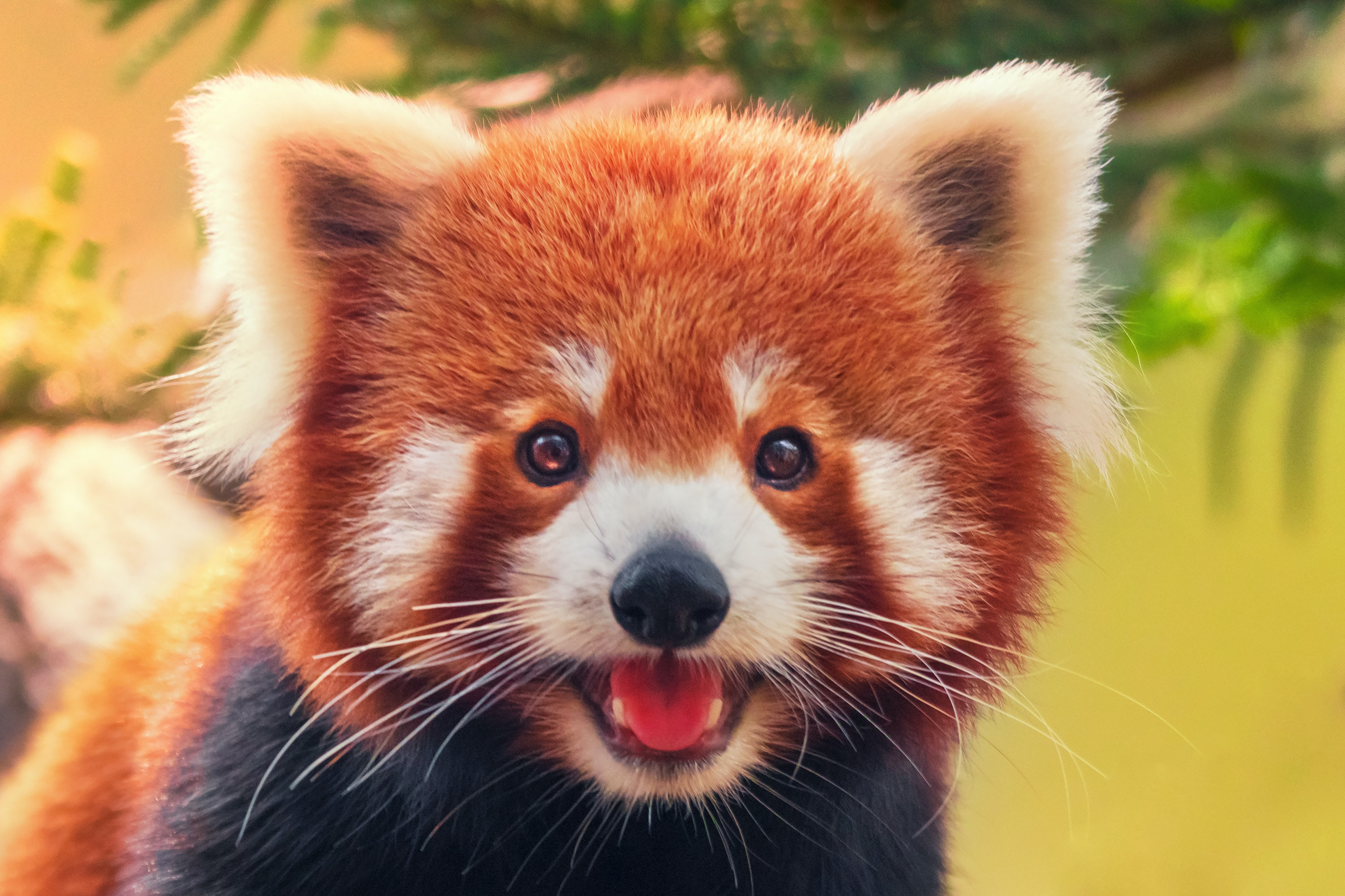 The Cutest Animal In The World Has A Rival