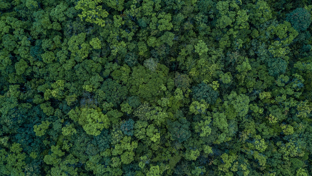 Aerial top view forest, Ecosystem and healthy environment concepts and background, Texture of forest view from above.
