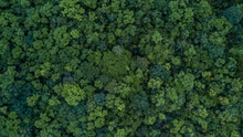 Aerial top view forest, Ecosystem and healthy environment concepts and background, Texture of forest...