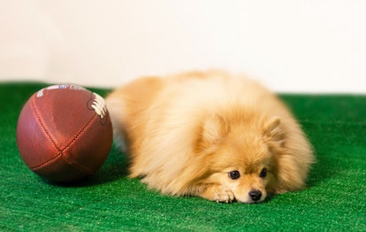 There are only winners in the puppy bowl.