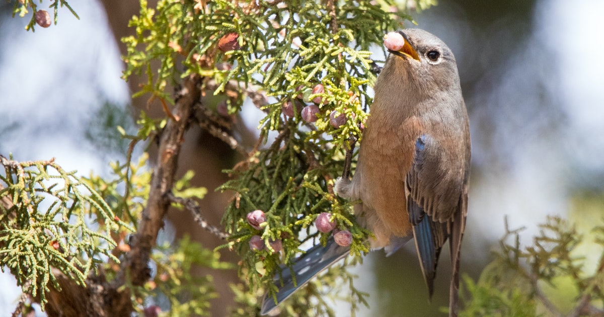 Which type of bird feeder is best? 6 types for 4 seasons