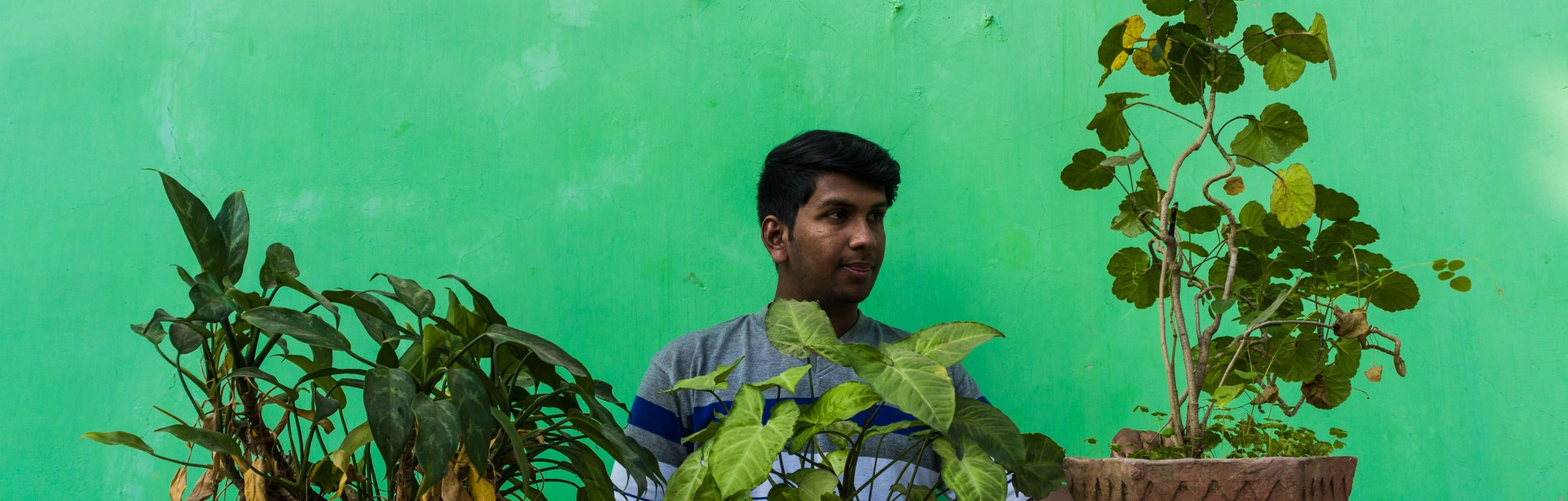 Adult man with ivy plant,house plant and Wood sorrels doing home gardening. Man taking care of plants and feed them water.