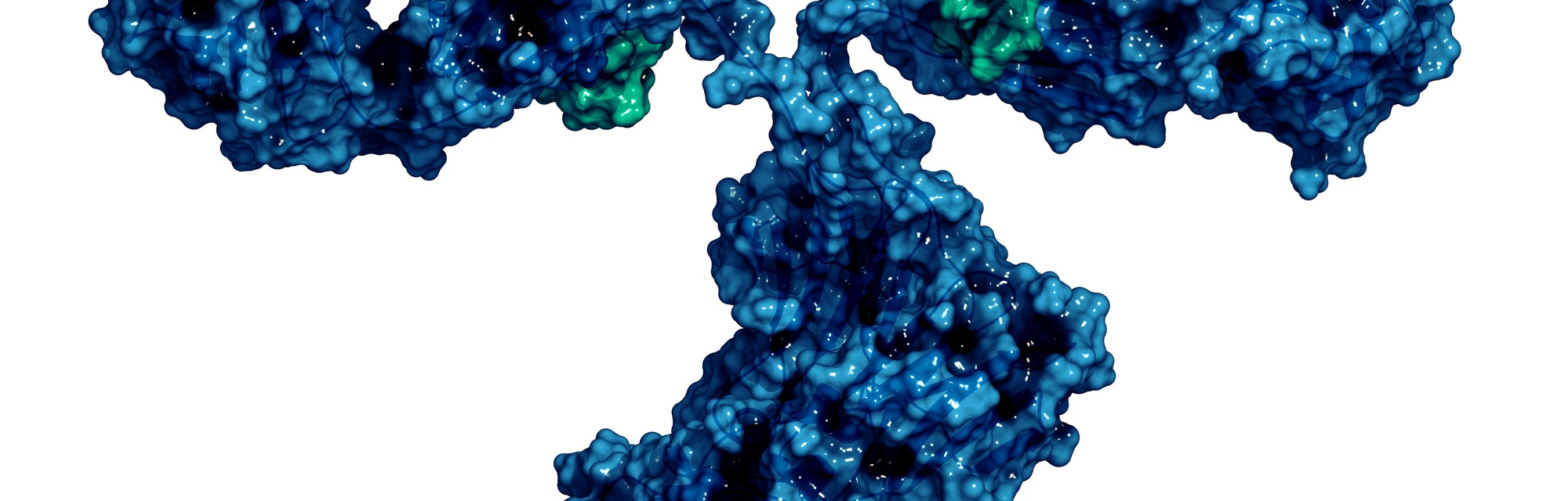 IgG2a monoclonal antibody (immunoglobulin), 3D rendering. Many biotech drugs are antibodies. Cartoon representation combined with semi-transparent surfaces. Heavy chains blue, light chains teal.
