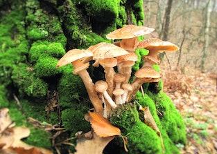 Mushrooms. Ukraine forest is rich in mushrooms. Mushrooms are of different types: mushrooms,mushrooms,mushrooms, mushrooms lisichki.