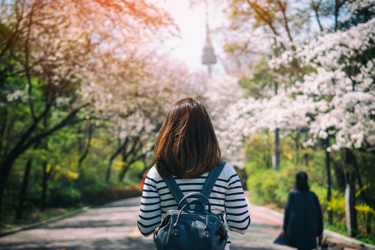 A young woman with a backpack admires the cherry blossoms on her travels.