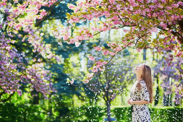 A woman wearing a white and black dress admires the cherry blossoms outside on a spring day.