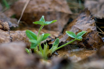 n the park through the leaves sprouted young green sprout