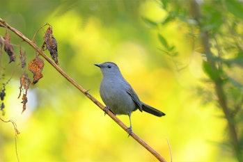 Cute little bird, Beautiful bird. Close up on bird