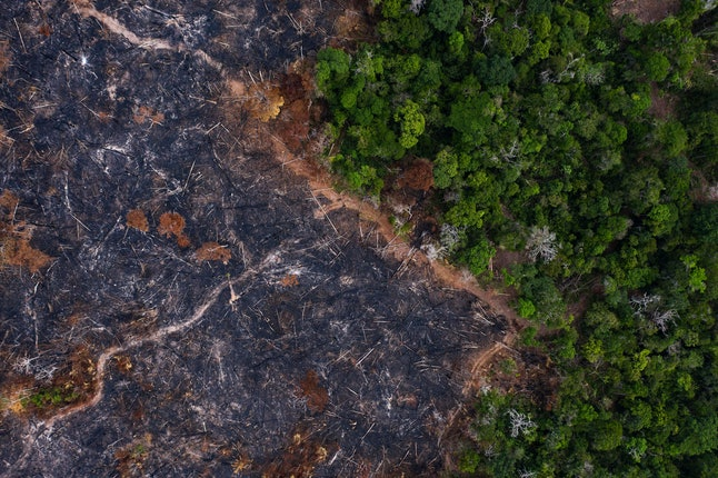 A burned area of the Amazon rainforest is seen in Prainha, Para state, Brazil. Official data show Amazon deforestation rose almost 30% in the 12 months through July, to its worst level in 11 years. Para state alone accounted for 40% of the loss