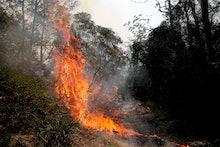 Fire burns through a section of bush at Koorainghat, near Taree, New South Wales, Australia, 12 Nove...