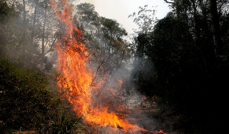 Fire burns through a section of bush at Koorainghat, near Taree, New South Wales, Australia, 12 November 2019. At least 60 fires are burning across New South Wales, with a fire front of approximately 1,000 kilometers. According to media reports, 200 properties in New South Wales and Queensland have been destroyed since 08 November.