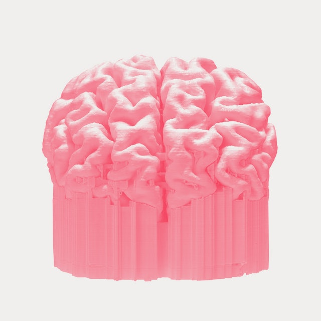 3D printed brain isolated on white background