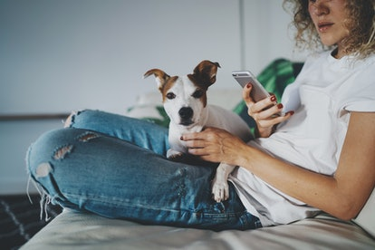 Cropped photo of a young hipster girl wearing in a blue jeans and white T-shirt writing text message on a modern mobile phone while sitting on sofa in light home interior with funny dog.