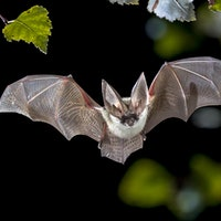 Study explains the controversial link between bats, rats, and Covid-19