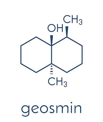 Geosmin earthy flavor molecule. Responsible for the typical taste of beetroot. Skeletal formula.