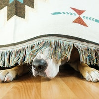 Dogs don't care about 1 part of the body as much you think