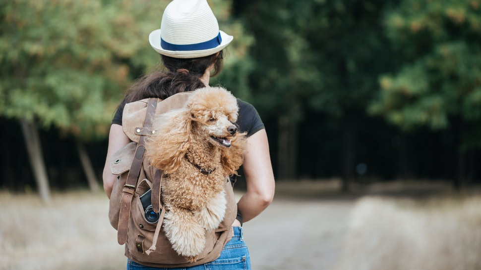 Woman traveler with dog in the backpack  and looking at forest. Concept of travel.
