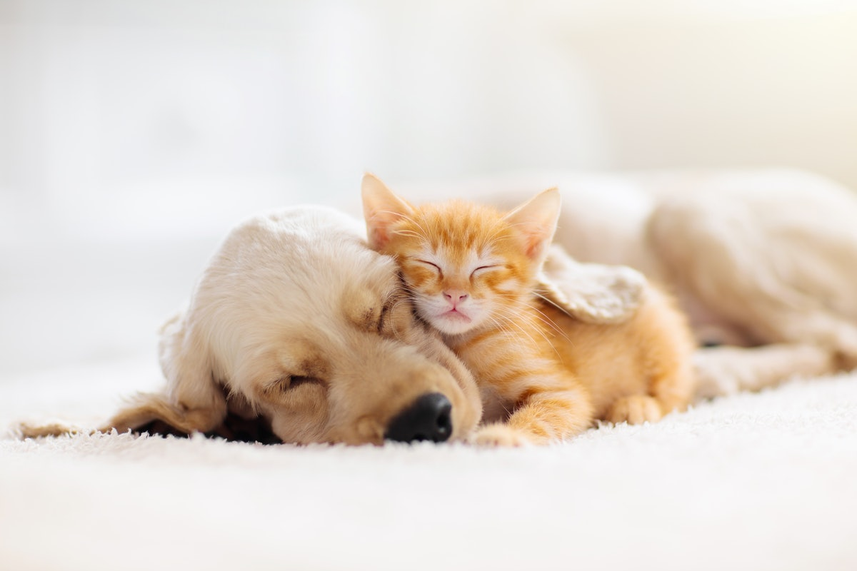 These National Pet Day 2021 tweets are filled with the cutest photos.