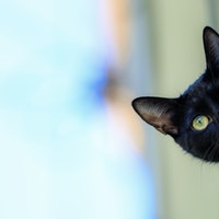 Why is your cat acting out? Study reveals 7 signs of anxiety