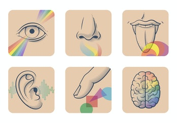Set of five human senses: sight, smell, taste, hearing and touch. Six anatomical images: nose, tongu...