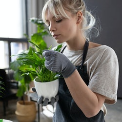 Portrait of smart girl examining exotic sprout leaves and making sure herbs healthy and fresh. Cute lady in garden outfit working with flowers. Gardening concept